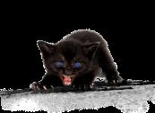 LOGO gattino-che-soffia
